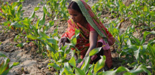 Female Indian farmer