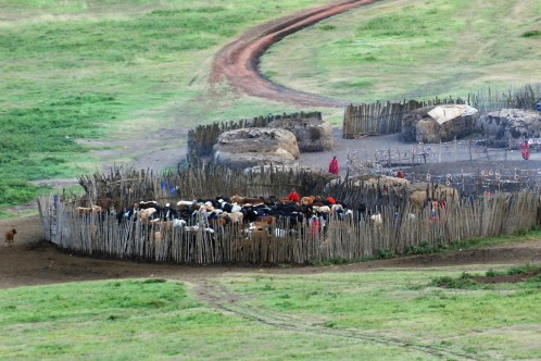 A Maasai village in the Ngorongoro Crater / note the individual lodges to the top and right and the coral for the livestock to the bottom left