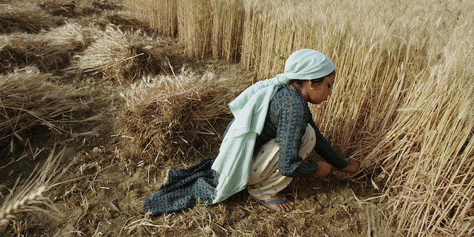 Bangladesh - Farms harvesting crops