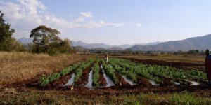 Irrigation in South Africa and adaptation to climate change.